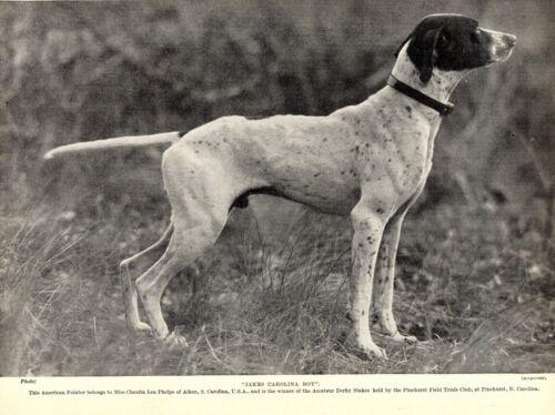 1930s Antique Pointer Dog Print Champion Jakes Carolina Boy Pointer 3542-U