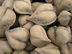 heartnuts