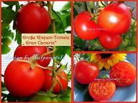 ♥ Große Rispen Tomate Gran Canaria,Rot,Samen,Alt bewährte Sorte Eimsbüttel - Hamburg Schnelsen Vorschau