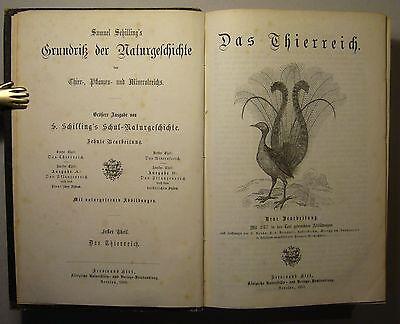 SCHILLING'S GRUNDRISS DER NATURGESCHICHTE, 3 Teile in 1 Band, 1869, Illustriert