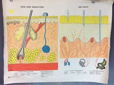 VINTAGE SCHOOL BIOLOGY POSTER, SKIN & SENSATIONS, 1960s/70s FREE UK DELIVERY