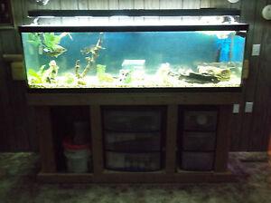 125-gallon-fish-tank-Aquarium-with-light-and-stand-Neosho-Missouri ...