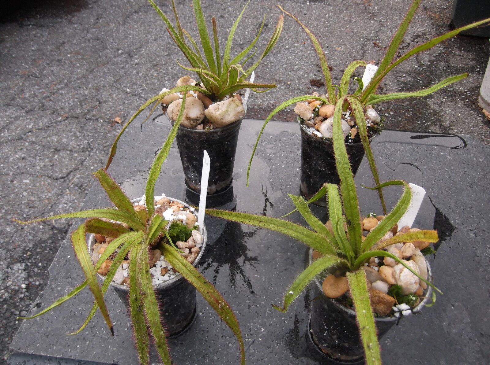Plants Bite Back -
