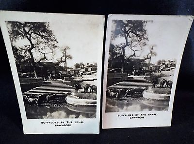 Peeps Into Many Lands No5 Left & Right Cards Buffaloes Cawnpore Photographic B/W