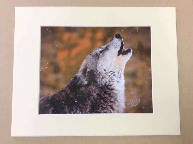 "2007 Original STEVE HINCH ""Call Of The Wild"" Wolf Photograph, Hand Signed"