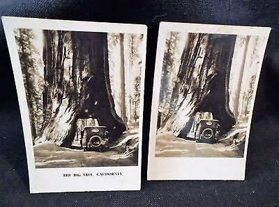 Peeps Into Many Lands No 14 Left & Right Cards Big Tree Calif Photographic B/W