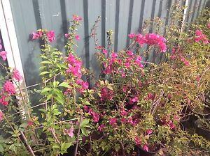 Outdoor plants Colyton Penrith Area Preview