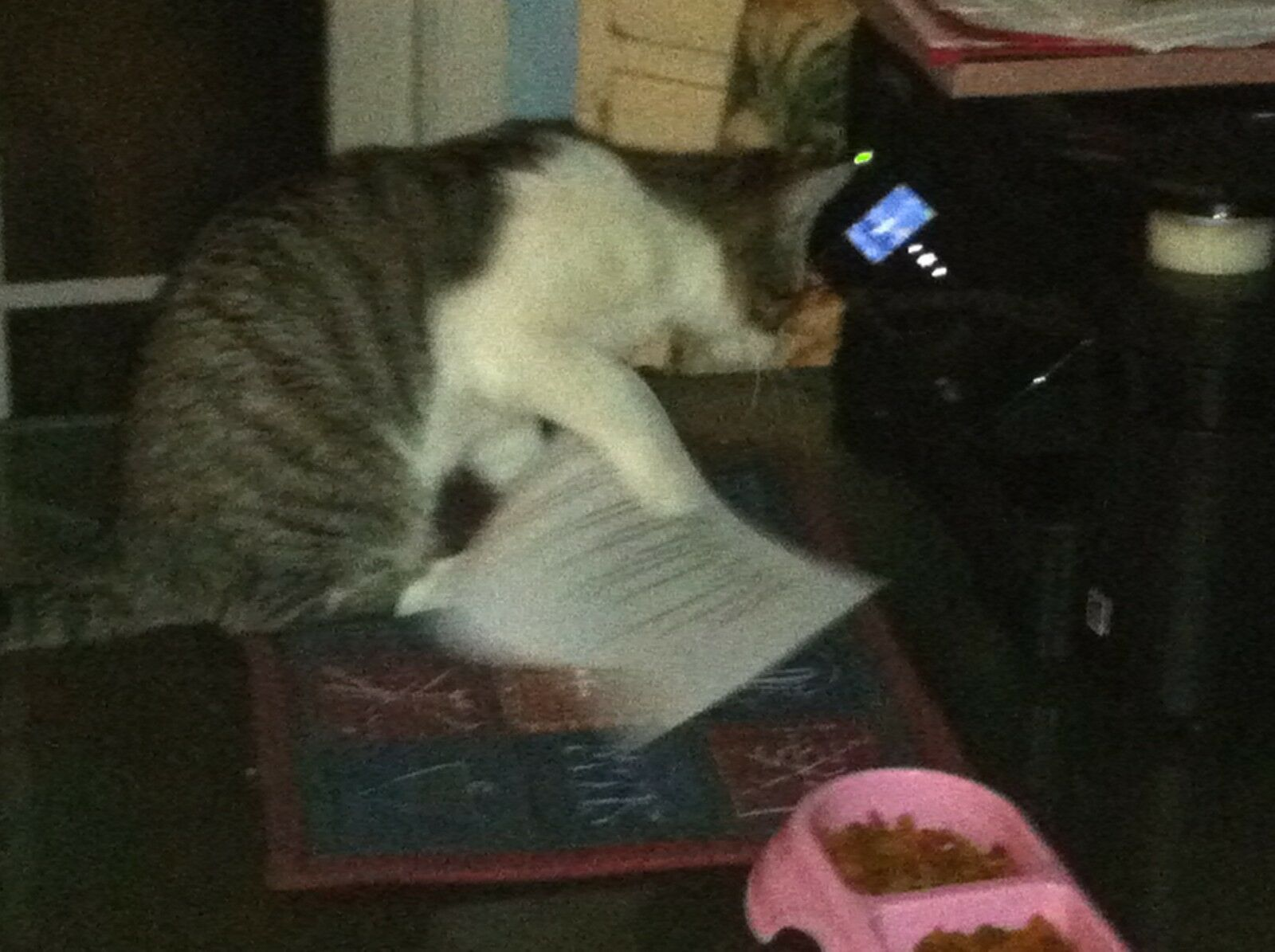 Koko and Kojis Catbox Archeology