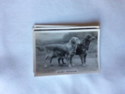 m17d1 cigarette card senior service dogs no 38 retrievers