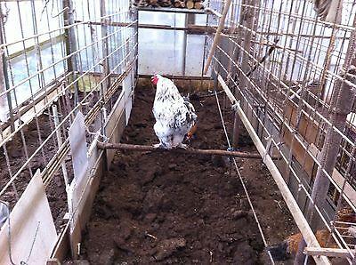 10 + 2 Frische Eier von Brahma Hühner Keine Bruteier