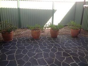 Large terracotta pots Springwood Logan Area Preview