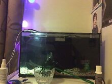 WANTED fish tank heater Amaroo Gungahlin Area Preview