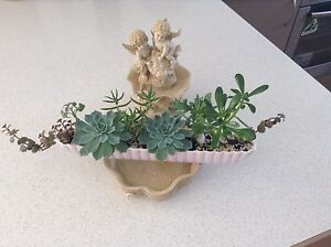 Mixed succulents in a slim ceramic rectangular dish Lenah Valley Hobart City Preview