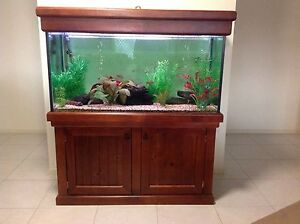 For Sale - 4ft Fish Tank Aquarium for Tropical Fish. Winwill Lockyer Valley Preview