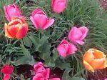 TulipCityDeals