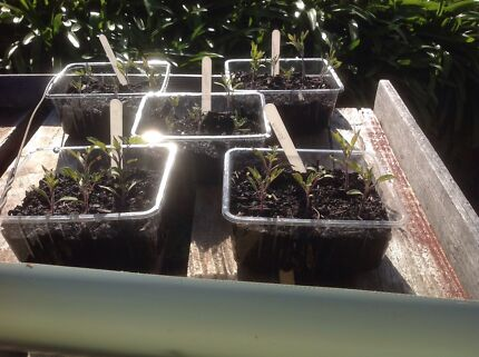 Organic seedlings and plants for sale