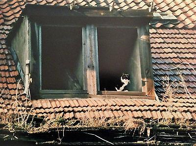 """Originalfoto selten """"Rostocker Altstadt 1989/90"""" Angelika Heim freie Fotografin"""