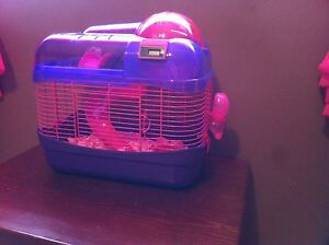 Free*** dwarf hamster with cage