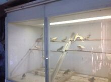 Gouldian Finches For Sale Sarsfield East Gippsland Preview