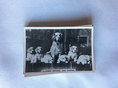 m17d1 cigarette card senior service dogs no 8 clumber spaniels