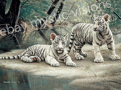 Charles White Art Prints - Charles Frace WHITE TIGER CUBS  9
