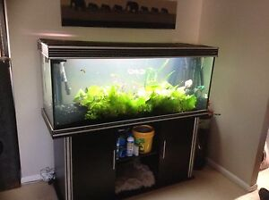 Large 5ft aquarium with stand and filters. Merrimac Gold Coast City Preview