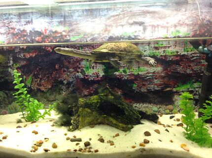 Longneck Turtle + Tank and Stand Oakleigh Monash Area Preview