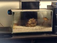 Fish tank Kellyville The Hills District Preview