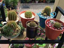 Cacti, Succulents, Jade plants Geilston Bay Clarence Area Preview