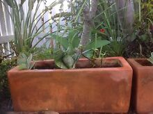 Terracotta Pots with Succulents Little Mountain Caloundra Area Preview
