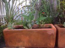 Terracotta Pots with Succulents Little Mountain Caloundra Area Preview