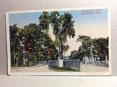 Washington Elm Cambridge Mass Middlesex Co Historical Land Mark Vintage Postcard
