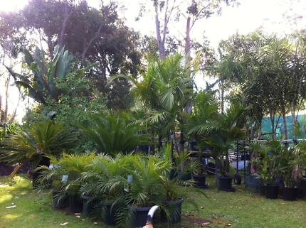 PALM TREES AND TROPICAL PLANTS, PRICES STARTING AT $25.00 Frankston South Frankston Area Preview
