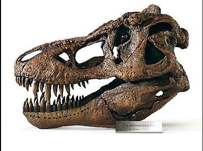 Tyrannosaurus Rex / T.rex  Large 1/4 Scale Dinosaur Skull Model From Dinostoreus