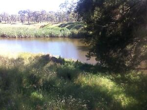 800 Acre Farm,Cattle,Sheep,Crops,Race Horses,Tourism,Saphires Sapphire Inverell Area Preview