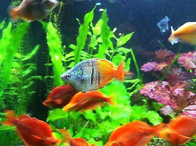 fishstore99