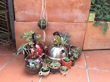 Succulents, Cacti and Terrariums Albert Park Port Phillip Preview