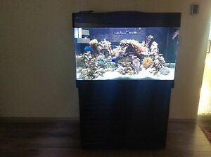 Red Sea max 250 marine fish tank Beechboro Swan Area Preview