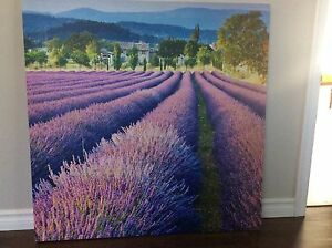 Beautiful lavender fields on Canvas/ REDUCED  to $30.