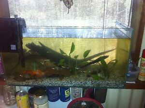 Fish tank with free fish Humpty Doo Litchfield Area Preview