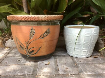 Potted Frangipani  $10  Terracotta  and white planter  both for $10