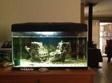 Fish Tank Kiara Swan Area Preview
