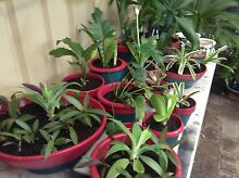 PLANT AND JEWELLERY SALE. 3 MISTRAL PLACE, WILLETTON. Willetton Canning Area Preview