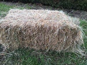 Hay,grass Belgrave South Yarra Ranges Preview