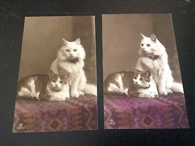 Lot de 2 Cartes postales chat