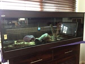 Blue Tongue Lizard and reptile Enclosure For Sale Bethania Logan Area Preview