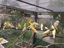 Various birds from 6 Rowville Knox Area Preview