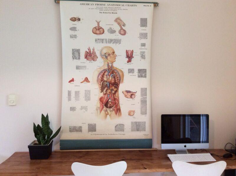 Vintage Medical Anatomical Chart