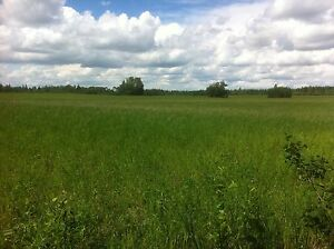 Quarter Section of Farmland 5 Minutes from Turtle Lake