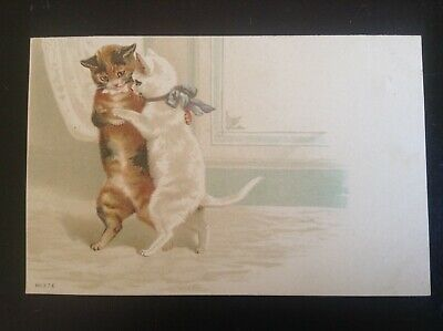 Ancienne carte postale chat 871